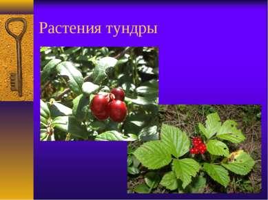 Растения тундры
