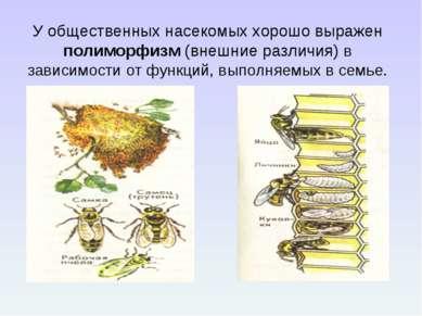 У общественных насекомых хорошо выражен полиморфизм (внешние различия) в зави...