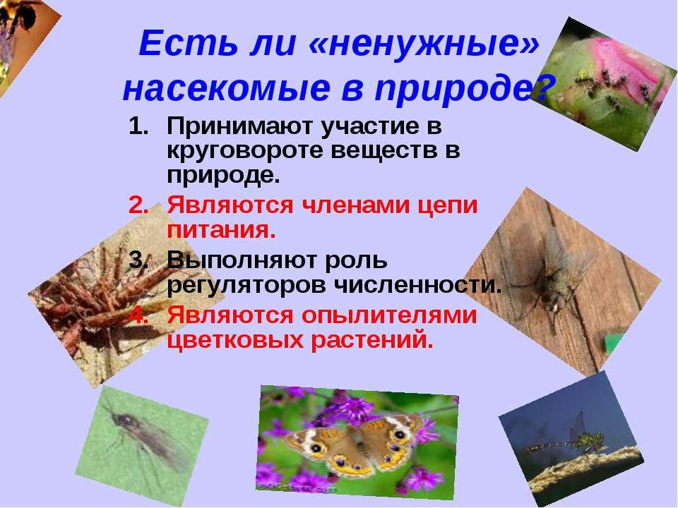 Есть ли «ненужные» насекомые в природе? Принимают участие в круговороте вещес...