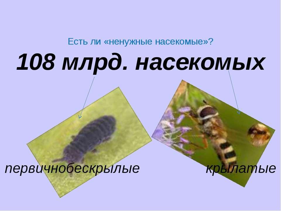 Есть ли «ненужные насекомые»? 108 млрд. насекомых первичнобескрылые крылатые