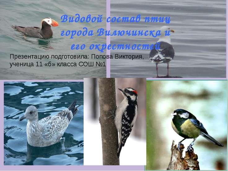 Видовой состав птиц города Вилючинска и его окрестностей Презентацию подготов...