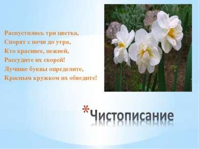 Распустились три цветка, Спорят с ночи до утра, Кто красивее, нежней, Рассуди...
