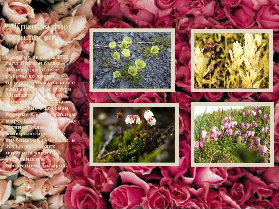 «Краткая флора Лапландии» С мая по октябрь 1732 года Линней был в Лапландии. ...
