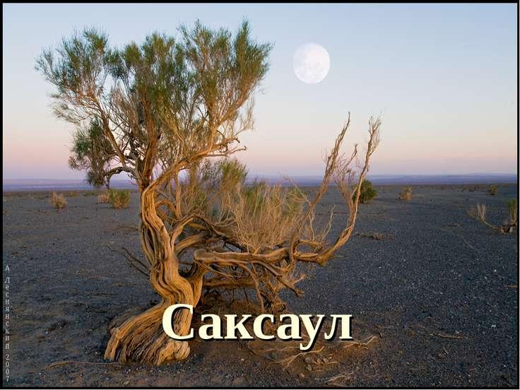 Саксаул