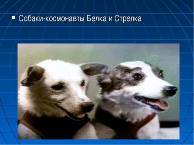 Собаки-космонавты Белка и Стрелка