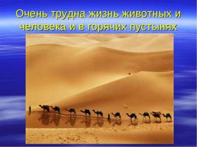 Очень трудна жизнь животных и человека и в горячих пустынях