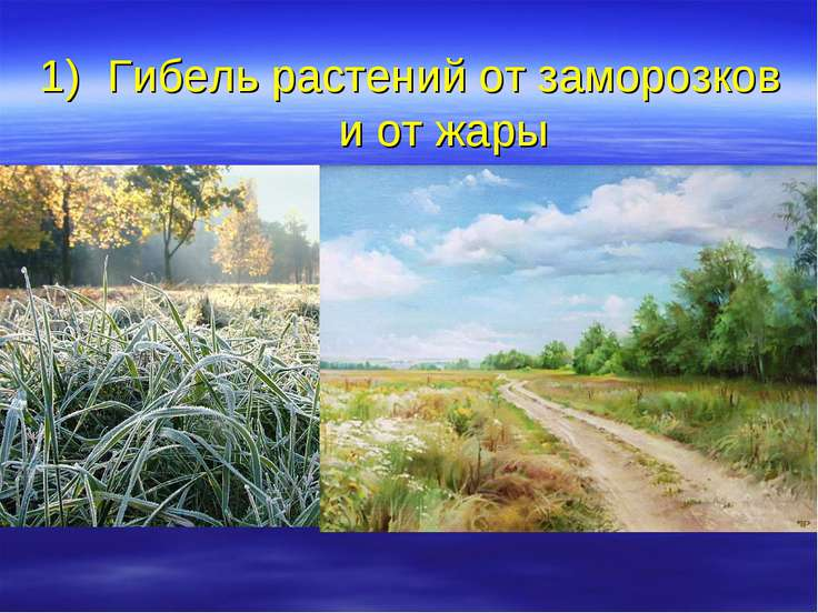 Гибель растений от заморозков и от жары