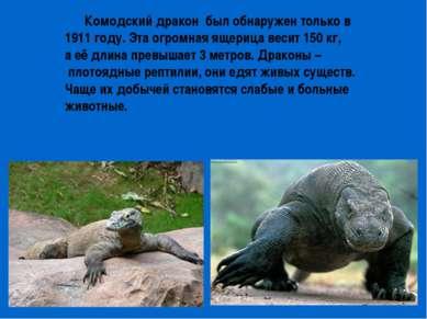 Комодский дракон был обнаружен только в 1911 году. Эта огромная ящерица весит...