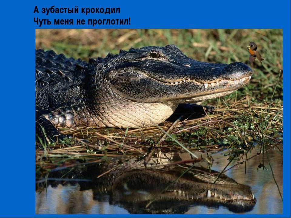 А зубастый крокодил Чуть меня не проглотил!