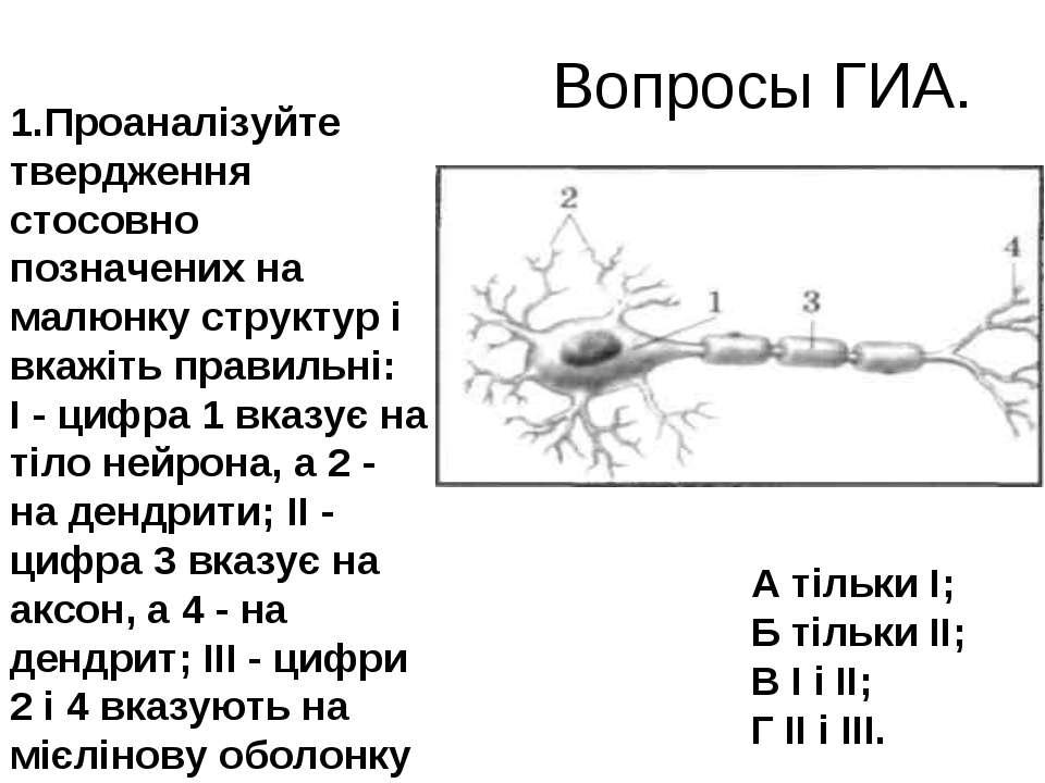 Вопросы ГИА. Проаналізуйте твердження стосовно позначених на малюнку структур...