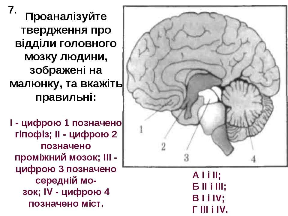 Проаналізуйте твердження про відділи головного мозку людини, зображені на мал...