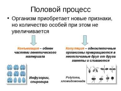 Половой процесс Организм приобретает новые признаки, но количество особей при...