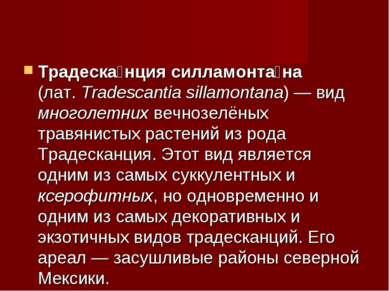 Традеска нция силламонта на (лат.Tradescantia sillamontana)— вид многолетни...
