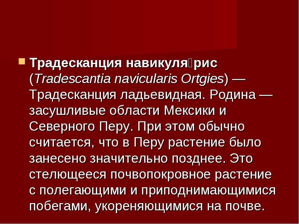 Традесканция навикуля рис (Tradescantia navicularis Ortgies)— Традесканция л...