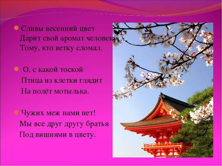 Сливы весенний цвет Дарит свой аромат человеку… Тому, кто ветку сломал. О, с ...