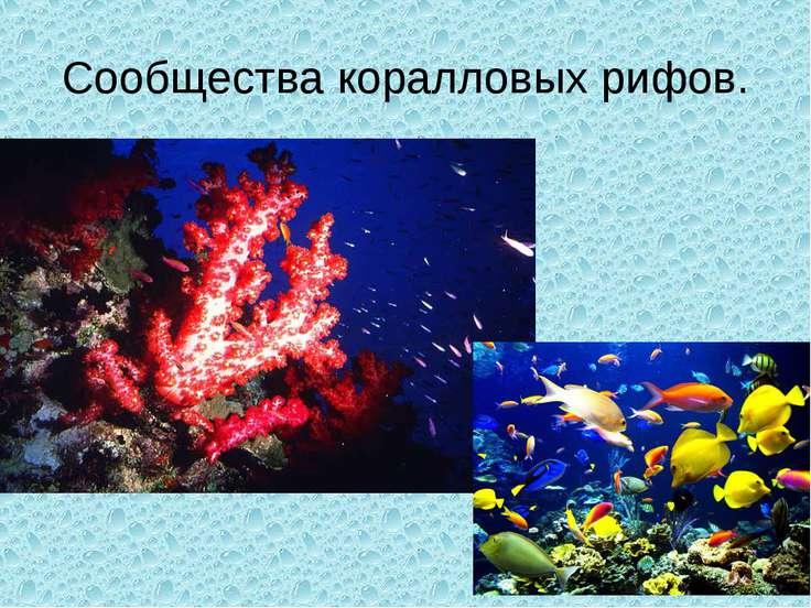 Сообщества коралловых рифов.