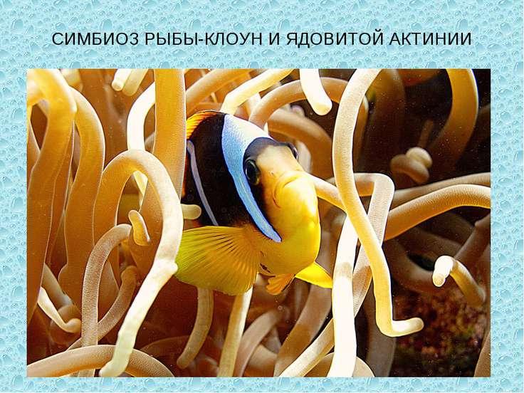 На тему клоун рыба презентация