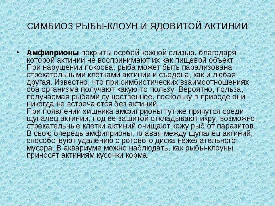 СИМБИОЗ РЫБЫ-КЛОУН И ЯДОВИТОЙ АКТИНИИ Амфиприоныпокрыты особой кожной слизью...
