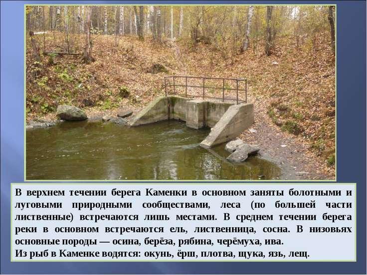 В верхнем течении берега Каменки в основном заняты болотными и луговыми приро...