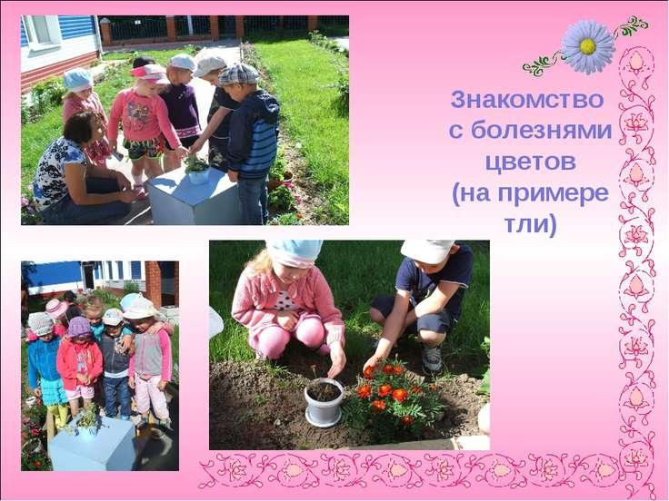 Знакомство с болезнями цветов (на примере тли)