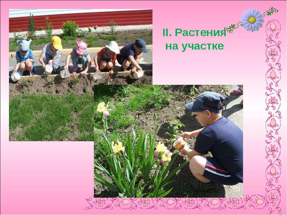II. Растения на участке