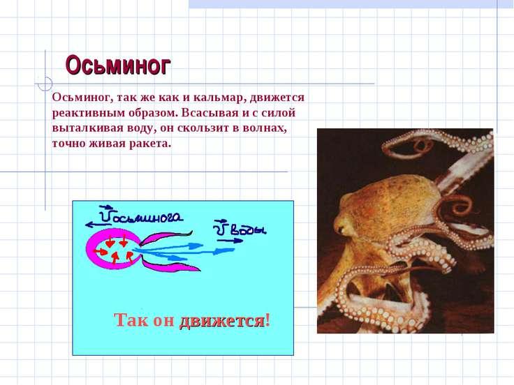 Осьминог Осьминог, так же как и кальмар, движется реактивным образом. Всасыва...