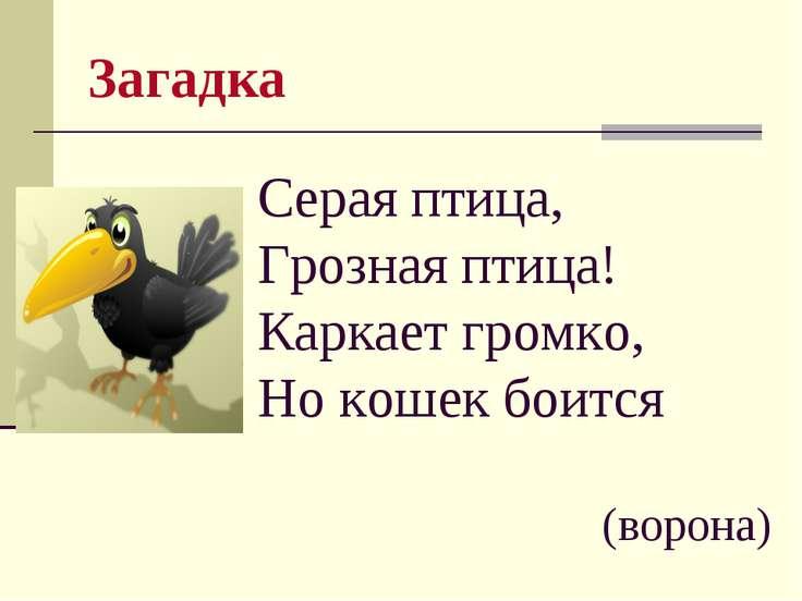 Загадка Серая птица, Грозная птица! Каркает громко, Но кошек боится (ворона)