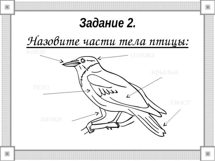 Задание 2. Назовите части тела птицы: клюв тело лапки хвост крылья голова
