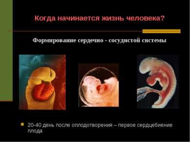 Когда начинается жизнь человека? 20-40 день после оплодотворения – первое сер...