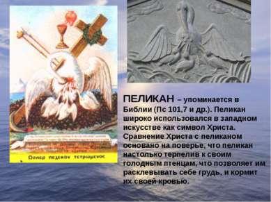 ПЕЛИКАН – упоминается в Библии (Пс 101,7 и др.). Пеликан широко использовался...