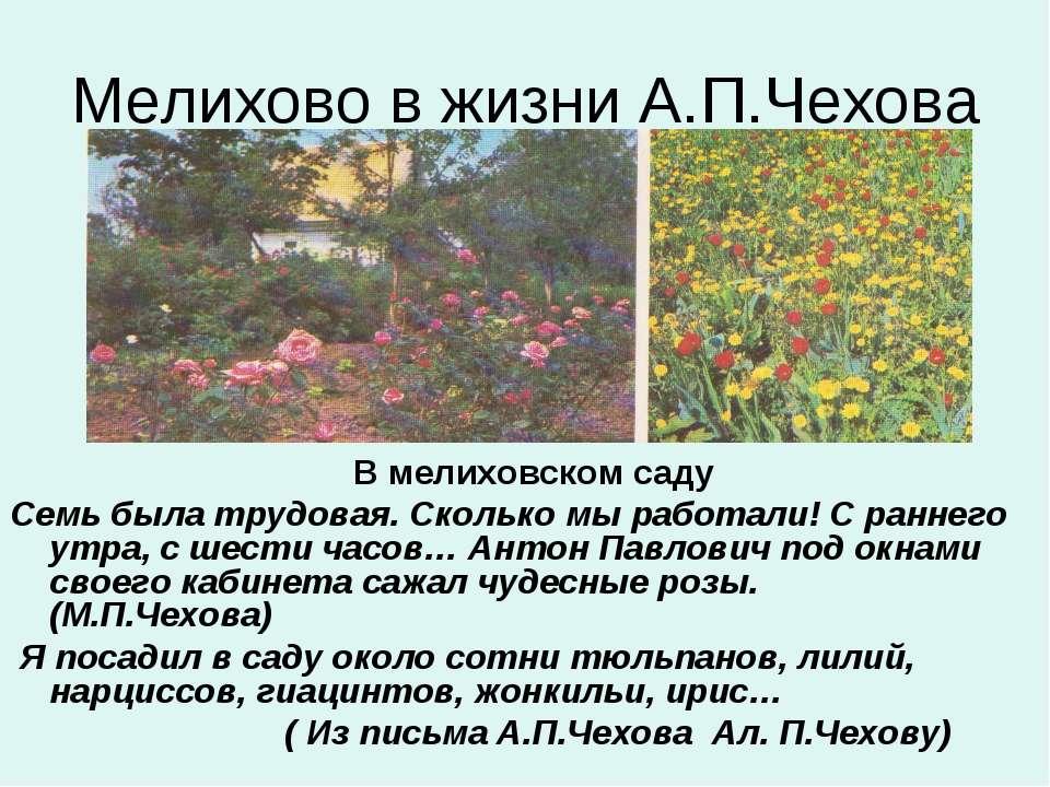 Мелихово в жизни А.П.Чехова В мелиховском саду Семь была трудовая. Сколько мы...