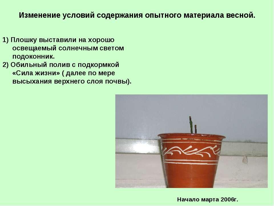 Изменение условий содержания опытного материала весной. 1) Плошку выставили н...