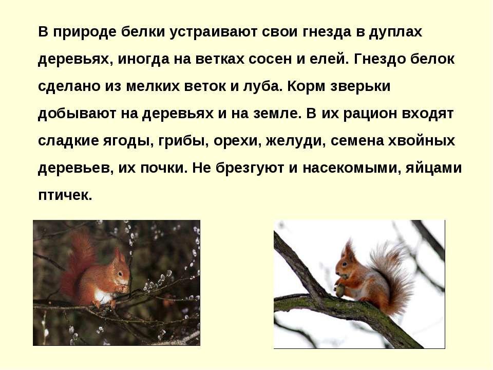 В природе белки устраивают свои гнезда в дуплах деревьях, иногда на ветках со...