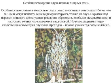 Особенности органа слуха ночных хищных птиц. Особенностью славятся тонкостью ...
