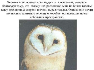 Человек приписывает сове мудрость в основном, наверное благодаря тому, что гл...