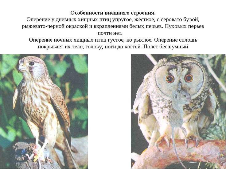 Особенности внешнего строения. Оперение у дневных хищных птиц упругое, жестко...