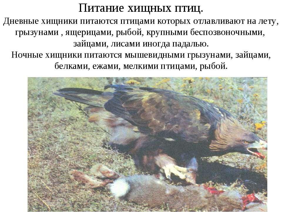 Питание хищных птиц. Дневные хищники питаются птицами которых отлавливают на ...
