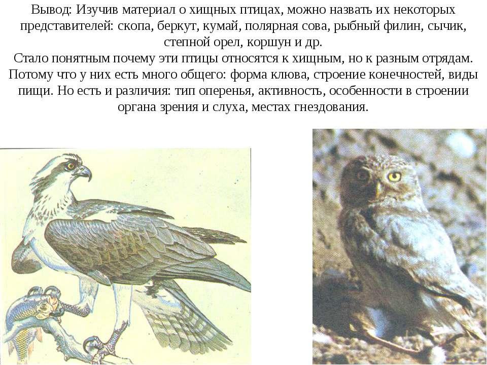 Вывод: Изучив материал о хищных птицах, можно назвать их некоторых представит...