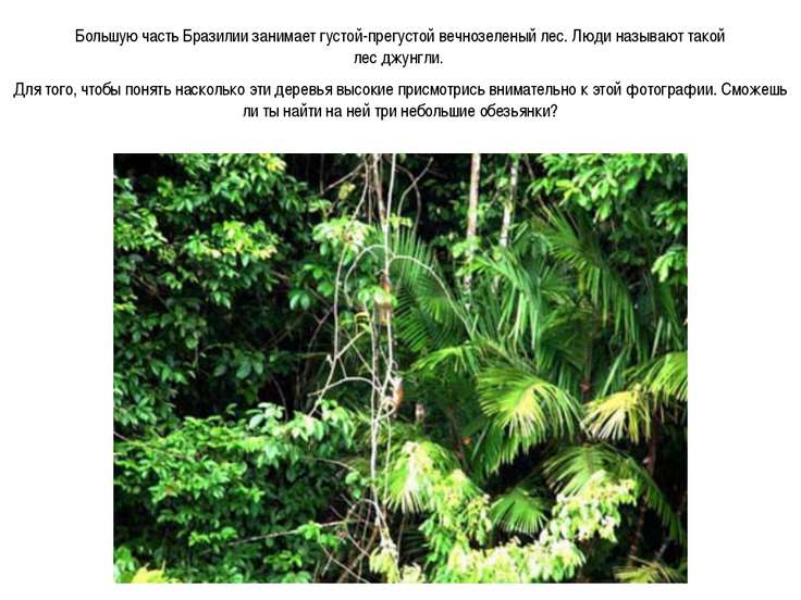 Большую часть Бразилии занимает густой-прегустой вечнозеленый лес. Люди назыв...