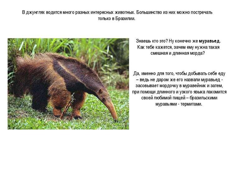 В джунглях водится много разных интересных животных. Большинство из них можно...
