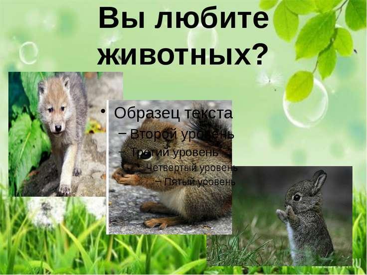 Вы любите животных?