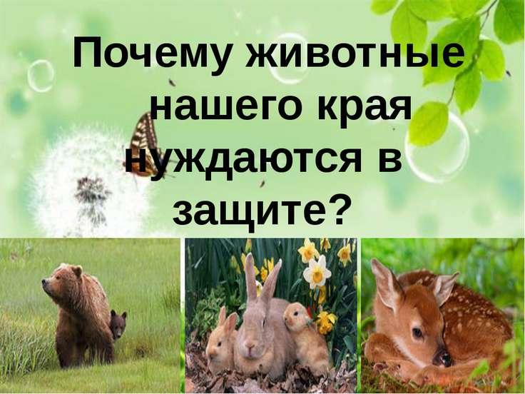 Почему животные нашего края нуждаются в защите?