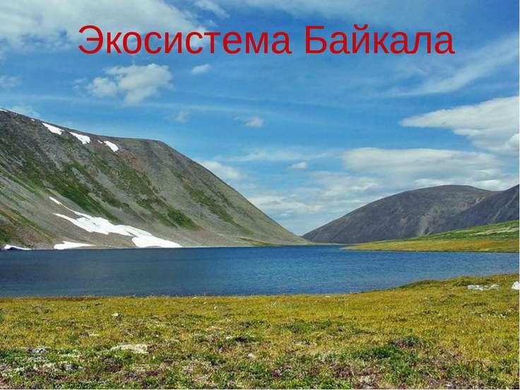 Экосистема Байкала