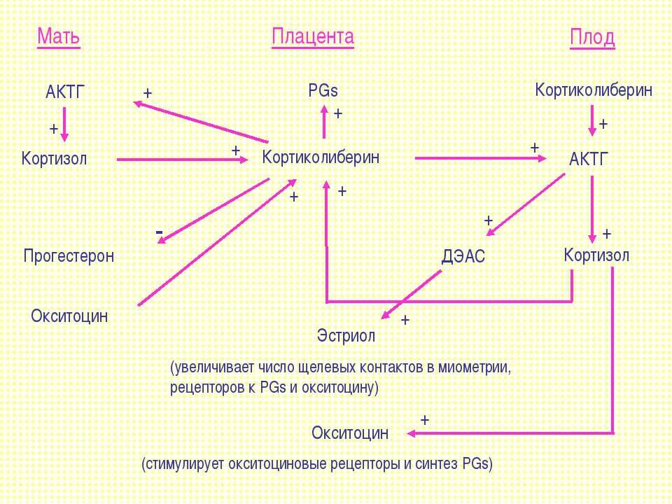 Мать Плацента Плод Кортизол Прогестерон Кортиколиберин Кортиколиберин PGs АКТ...