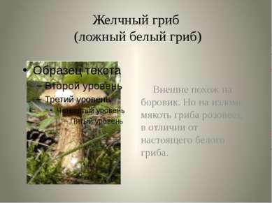 Желчный гриб (ложный белый гриб) Внешне похож на боровик. Но на изломе мякоть...