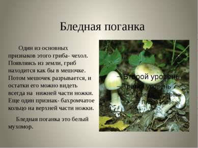 Бледная поганка Один из основных признаков этого гриба- чехол. Появляясь из з...