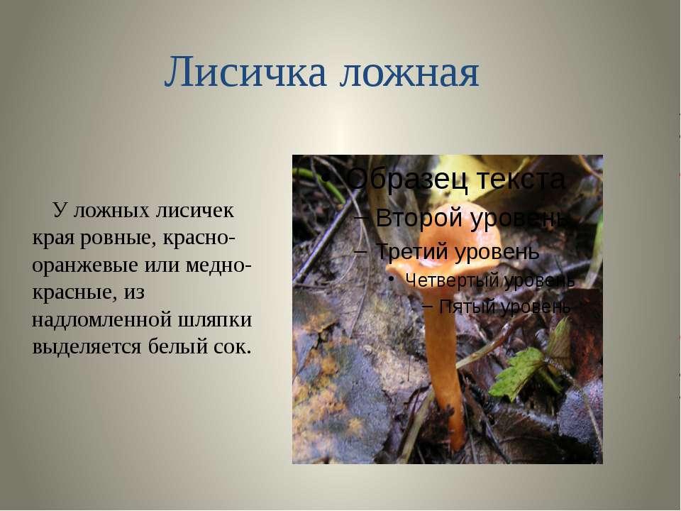 У ложных лисичек края ровные, красно- оранжевые или медно-красные, из надломл...
