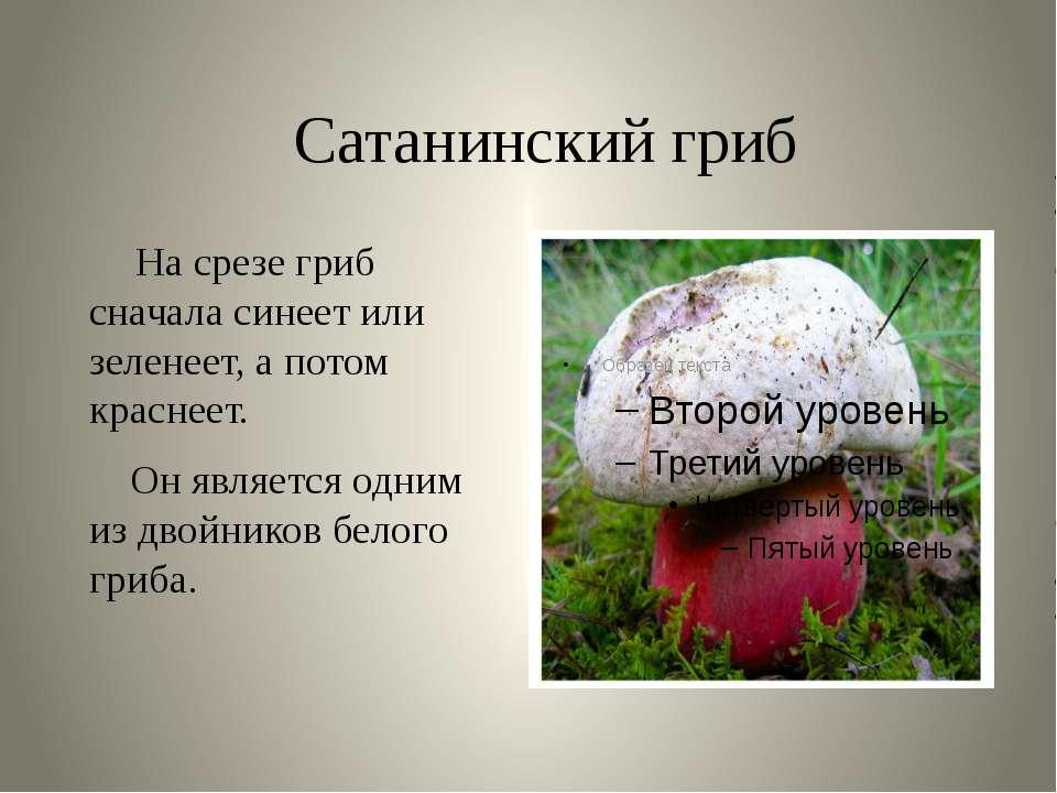 Сатанинский гриб На срезе гриб сначала синеет или зеленеет, а потом краснеет....