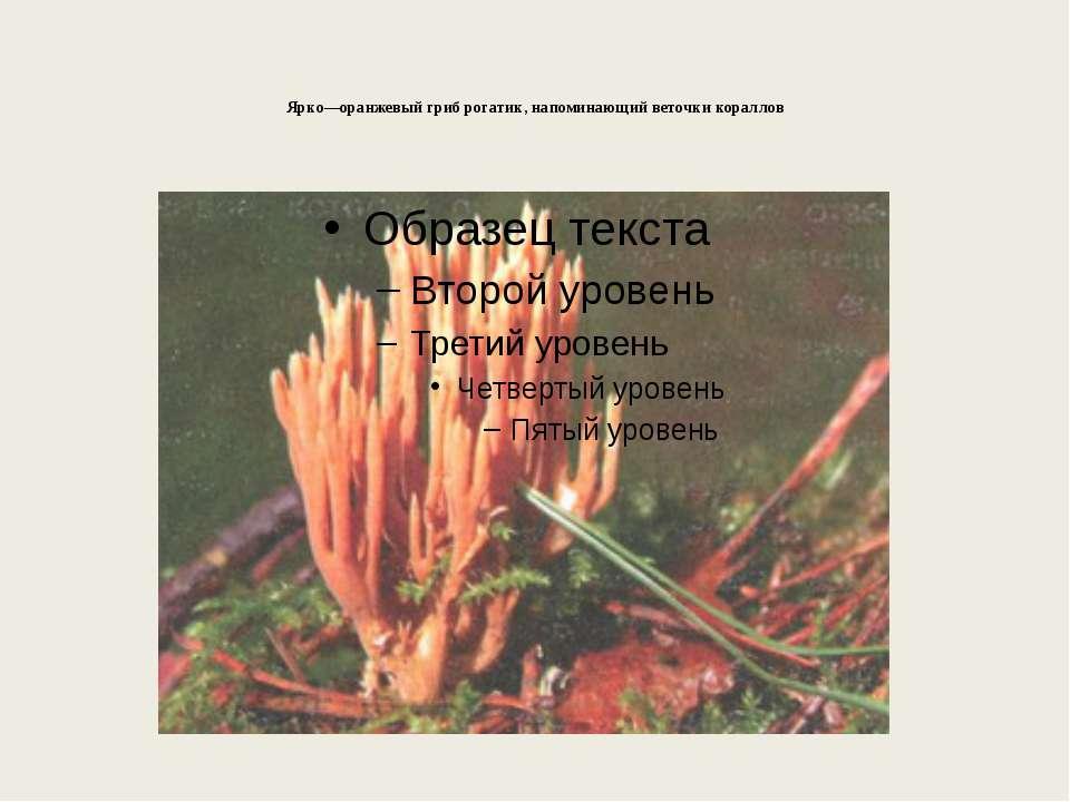 Ярко—оранжевый гриб рогатик, напоминающий веточки кораллов