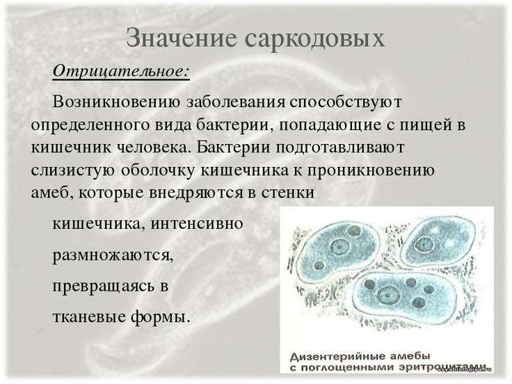 Значение саркодовых Отрицательное: Возникновению заболевания способствуют опр...